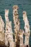 Grote golfbreker, 3000 boomstammen om de stad van de getijden te verdedigen, stock foto