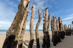 Grote golfbreker, 3000 boomstammen om de stad van de getijden te verdedigen royalty-vrije stock foto