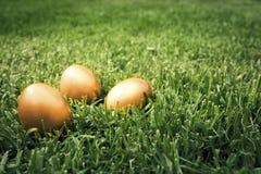 Grote gouden eieren op het gras Royalty-vrije Stock Afbeeldingen