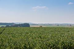 Grote grainfields in het midden van het Duitse platteland met heuvels, bossen en weiden royalty-vrije stock fotografie