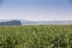 Grote grainfields in het midden van het Duitse platteland met heuvels, bossen en weiden stock afbeeldingen