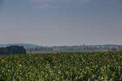 Grote grainfields in het midden van het Duitse platteland met heuvels, bossen en weiden stock afbeelding