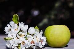 Grote groene Apple en tak van bloeiend Apple stock fotografie