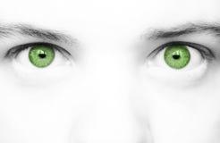 Grote groene ogen stock foto
