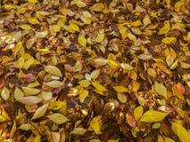 Grote Groep Kleurrijk Autumn Leaves Royalty-vrije Stock Foto