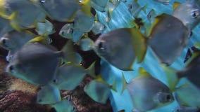 Grote groep koraalvissen stock video