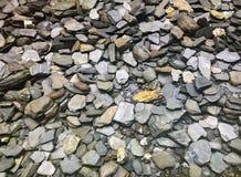 Grote Groep Rotsen en Stenen in een Tuin Royalty-vrije Stock Foto's