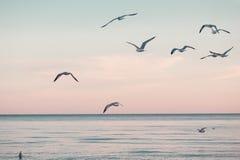 Grote groepstroep van zeemeeuwen op overzees meerwater en het vliegen in hemel op de zomerzonsondergang Royalty-vrije Stock Fotografie