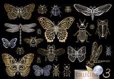 Grote hand getrokken gouden lijnreeks insecteninsecten, kevers, honingbijen, vlinder, mot, hommel, wesp, libel, sprinkhaan stock illustratie