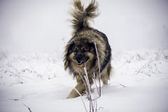 Grote herdershond in de sneeuw stock foto