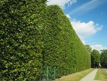 Grote Hoge ecologische groene muur Stock Afbeelding