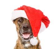 Grote hond in de rode hoed van de Kerstmiskerstman Geïsoleerde Royalty-vrije Stock Afbeeldingen