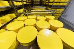 Grote hoofden van verse gele die kaas op kaaspakhuis wordt geïsoleerd stock fotografie