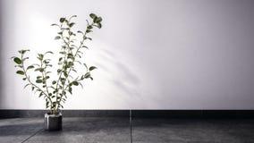 Grote houseplant op donkere vloer vector illustratie