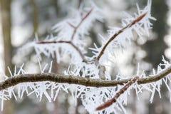 Grote ijsnaalden op een kleine tak royalty-vrije stock afbeeldingen