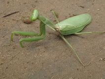 Grote insecten Royalty-vrije Stock Foto