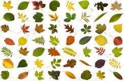 Grote inzameling van bladeren stock fotografie