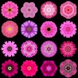 Grote Inzameling van Diverse Purpere die Patroonbloemen op Zwarte wordt geïsoleerd Royalty-vrije Stock Foto's
