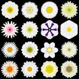 Grote Inzameling van Diverse Witte die Patroonbloemen op Zwarte wordt geïsoleerd Stock Foto