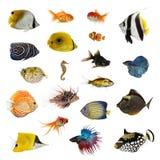 Grote inzameling van vissen, huisdier en exotisch, in verschillende positie stock afbeelding