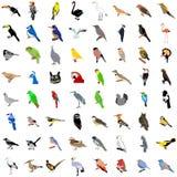 Grote inzameling van vogels vector illustratie