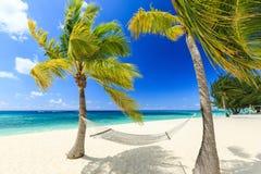 Grote Kaaiman, Caymaneilanden Royalty-vrije Stock Afbeelding