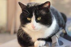 Grote kat Stock Fotografie