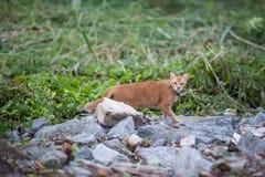 Grote kat in de wildernis. Royalty-vrije Stock Foto