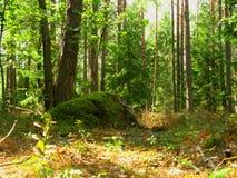 Grote kei die met mos in het bos wordt behandeld royalty-vrije stock afbeelding