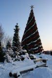 Grote Kerstmisboom Stock Afbeelding
