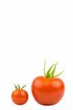 Grote, kleine Tomatoe 2 Stock Foto