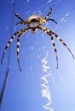 Grote kleurrijke spin Royalty-vrije Stock Afbeeldingen