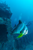 Grote Knuppelvissen en schipbreuk stock foto's