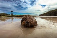 Grote kokosnoot Stock Afbeeldingen