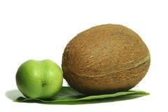 Grote kokosnoot 6 Stock Foto