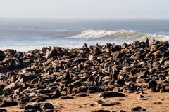 Grote kolonie van de verbindingen van het Kaapbont bij Kaapkruis in Namibië stock afbeeldingen