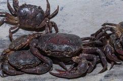 Grote Krab in het Noorden van Thailand stock foto's