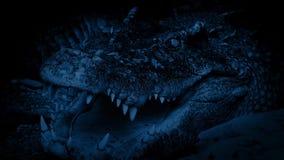 Grote Krokodil bij Nacht stock footage