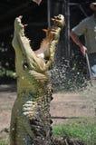 Grote Krokodil die uit Water met Kaken Ope springt stock foto