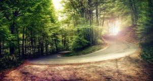 Grote kromme in het bos met zonlicht royalty-vrije stock afbeeldingen