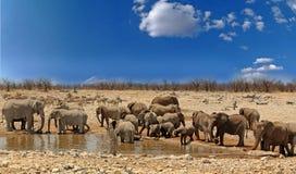 Grote kudde van olifanten bij een waterhole met een trillende blauwe hemel in het Nationale Park van Etosha, Namibië Stock Foto's