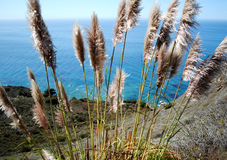 Grote kust Sur Royalty-vrije Stock Foto's