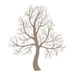 Grote leafless boom Stock Afbeeldingen