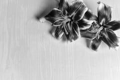 Grote lelies op een houten lijst Royalty-vrije Stock Foto