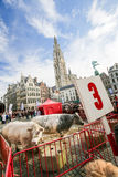 Grote Markt Antwerp Royalty Free Stock Photography