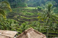Grote mening van Padievelden, Ubud, Bali Stock Afbeelding