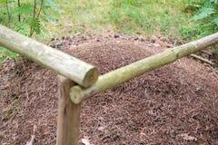 Grote mierenhoop in het hout stock fotografie