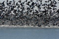 Grote migratie stock afbeeldingen