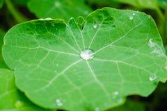Grote mooie dalingen van regenwater op een groene bladmacro Dalingen van dauw in de ochtendgloed in de zon Mooie bladtextuur Na royalty-vrije stock afbeeldingen