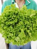 Grote, mooie en zeer groene bladsalade stock foto's